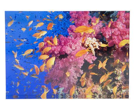 Acrylic Photo Block - Photos on Acrylic Block